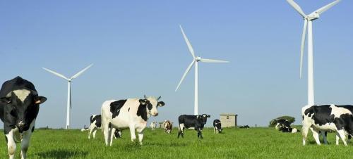 Le Figaro - Ces éoliennes qui troublent le lait des vaches